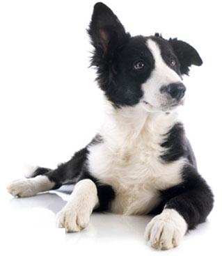 Tierhalterversicherung